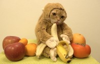 Watch Cats in Monkey Suits 2016