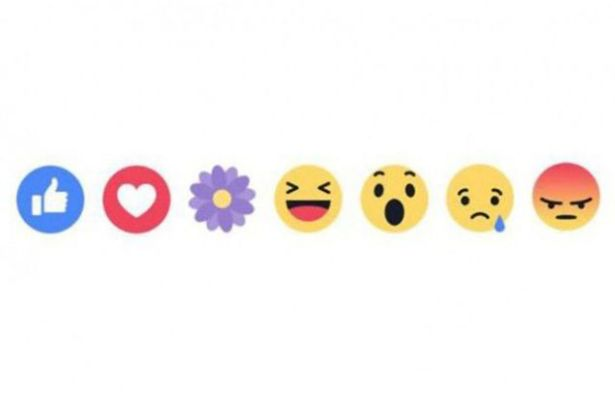 The Secret Reason Facebook Introduced The Purple Flower Reaction Flower 1 1